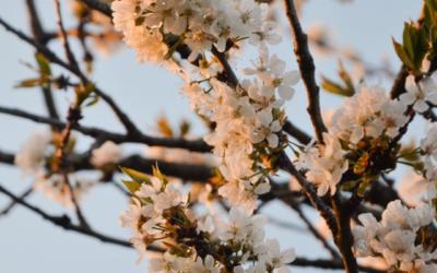 Comment soigner naturellement les allergies saisonnières ?